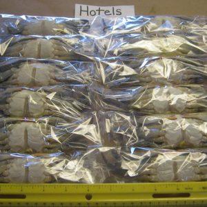 1 Dozen Hotel Crabs