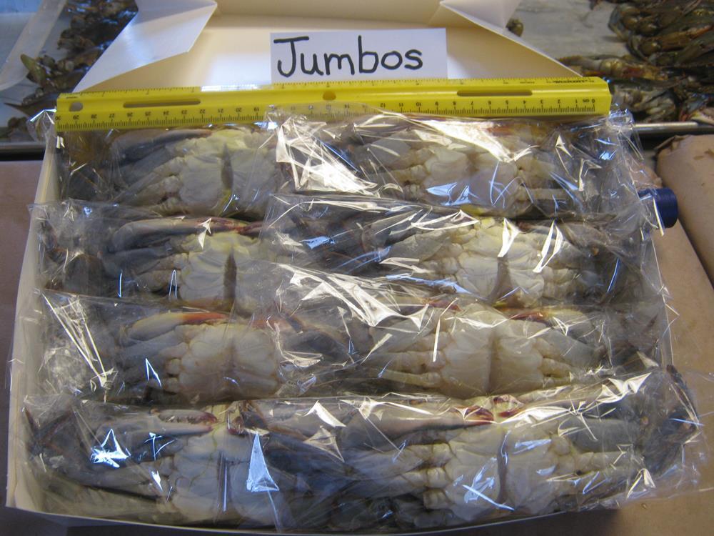 6 Jumbo Crabs